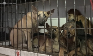 Ho Chi Minh City raids largest dog meat market