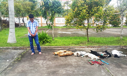 Dog thief arrested upon delivery to restaurants in Vietnam