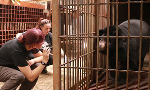 Moon bear freed after 15 years of captivity in northern Vietnam