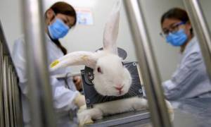 8.3 million signatures to UN to end cosmetic animal testing globally