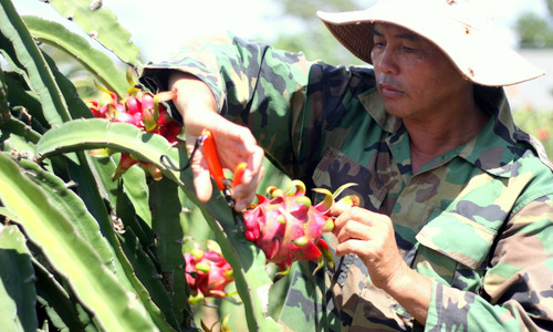 Vietnam fruits, vegetables struggle to enter overseas market