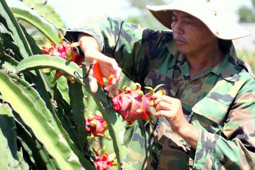 Vietnam fruits, vegetables struggle to enter overseas market