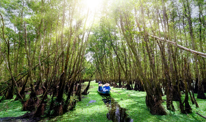 A boat tour in the mangrove forest in An Giang province, Mekong Delta.
