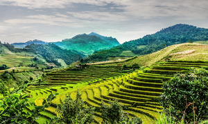 Five destinations with terrific terraced fields for an October visit in Vietnam