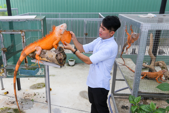 Mr. Lizard in Saigon sells iguanas as a hobby - edited