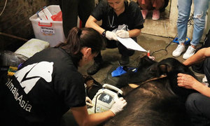 Wildlife protection group frees 200th bear from Vietnam bile farm