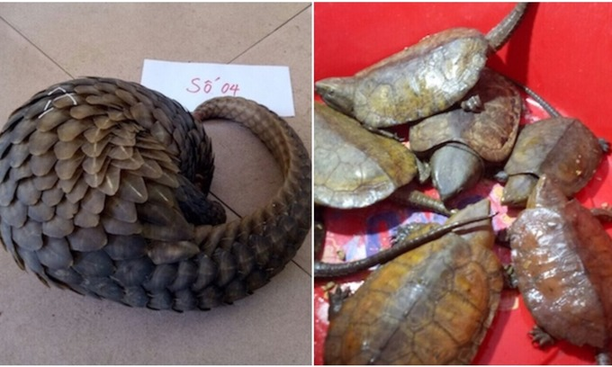 Man arrested for smuggling endangered turtles, pangolins