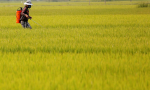 $50 billion surplus: Vietnamese agriculture reaps hi-tech dividends