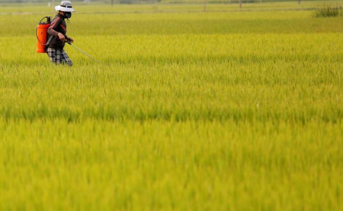 $50 billion surplus: Vietnamese agriculture reaps hi-tech dividends