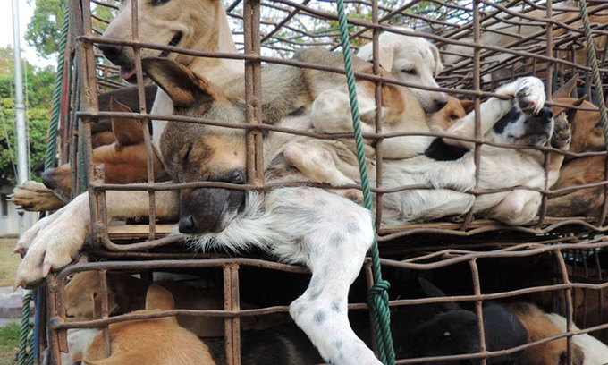 Vietnamese immigrant workers face jail time for killing dogs in Taiwan