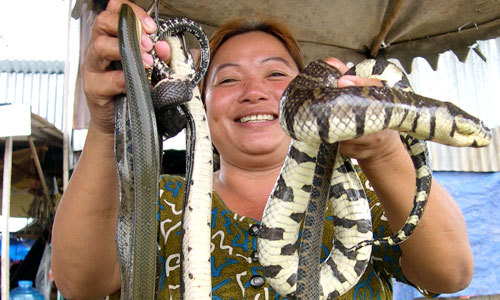 Edible snakes at Vietnam seafood market