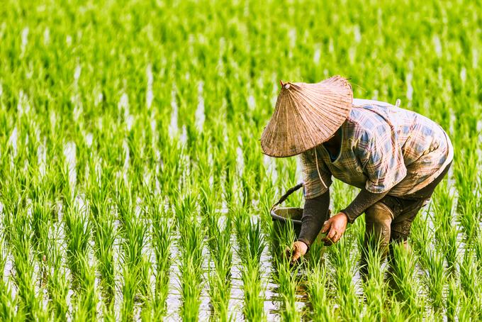 Vietnam Jan-Oct coffee exports seen up 21.5 pct, rice to grow 3.4 pct