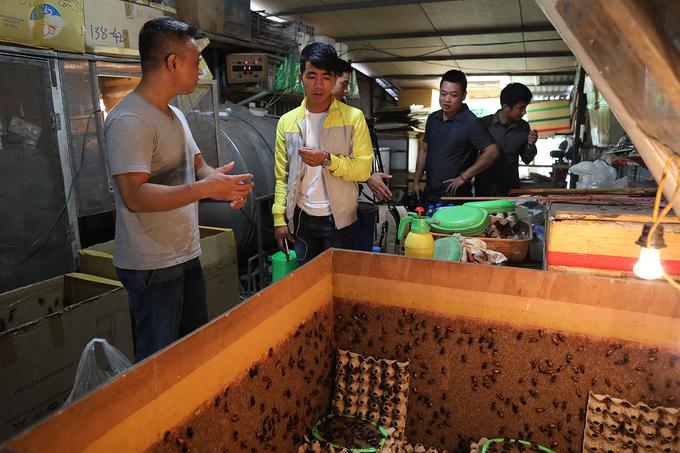 Cricket breeding goes hopping in Hanoi