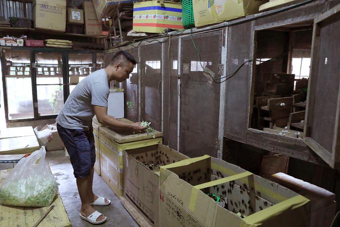 Cricket breeding goes hopping in Hanoi - 1