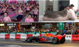 Weekly roundup: Formula One ambitions, coffee success stories, Saigon pet pig and more
