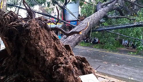 Toraji devolves into tropical depression off central Vietnam coasts