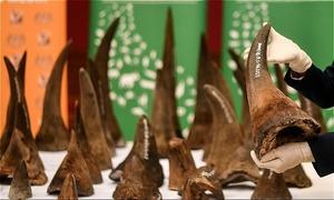 Thai prosecutor among trio jailed for $1.4m rhino horn haul