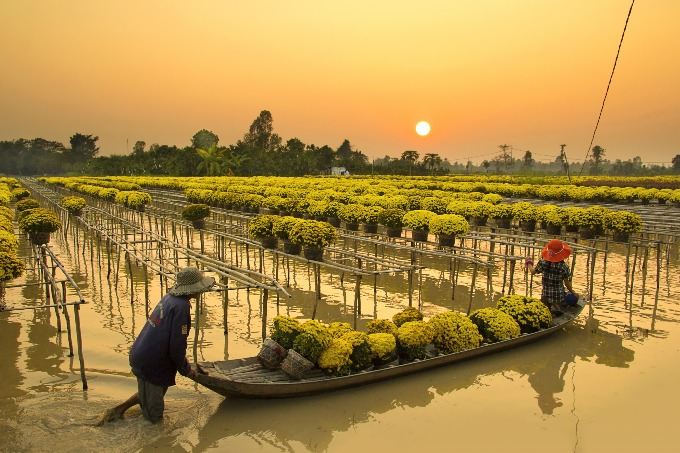Two farmers are working in a flower village in Sa Dec city, Dong Thap province. Photo by Shutterstock/Dory F