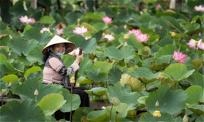 Dong Thap is renowned for its lotus fields. Photo by Shutterstock/Tzido Sun