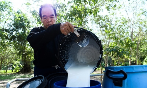 Thai rubber farms stretched as US-China trade war saps demand