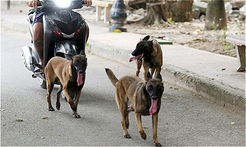 Hanoi to catch unattended dogs to fight rabies