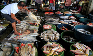 Breakfast at risk: Philippines tries to turn the tide on fish losses