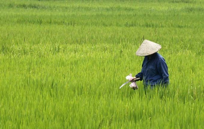 Vietnam Jan-Nov coffee exports up 23 pct, rice 4.8 pct