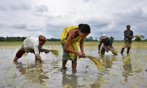 India rice rates slip; tough Chinese rules dent Vietnam exports