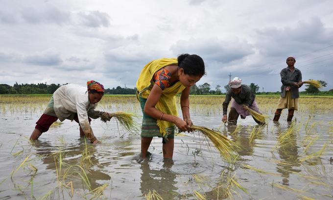 India rice rates slip