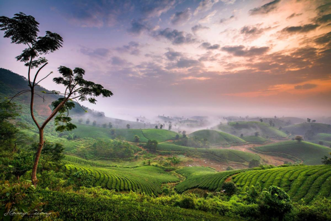 Stuff of dreams: stunning vistas of Long Coc tea hills - 1