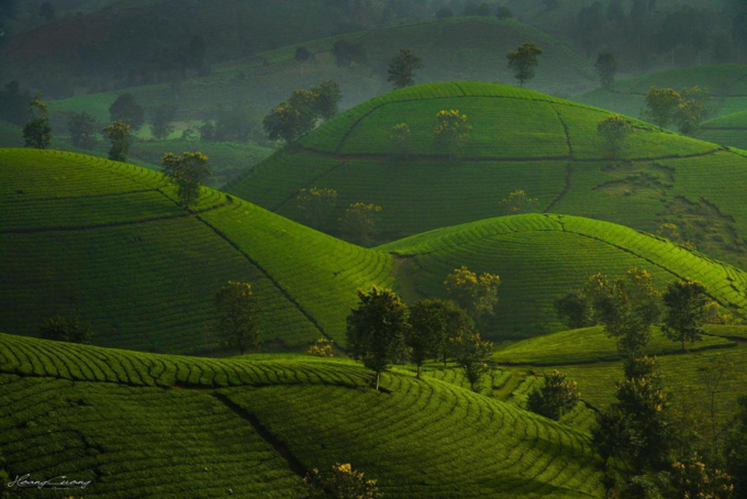 Stuff of dreams: stunning vistas of Long Coc tea hills - 2