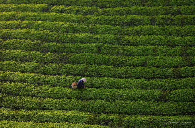 Stuff of dreams: stunning vistas of Long Coc tea hills - 8