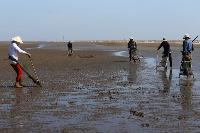 Ben Tre farmers dig up clams for extra cash