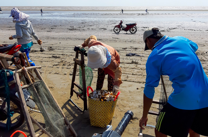 Ben Tre farmers dig up clams for extra cash - 7