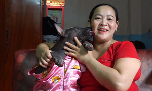 'Ugly' dog in Saigon gets perfect mom