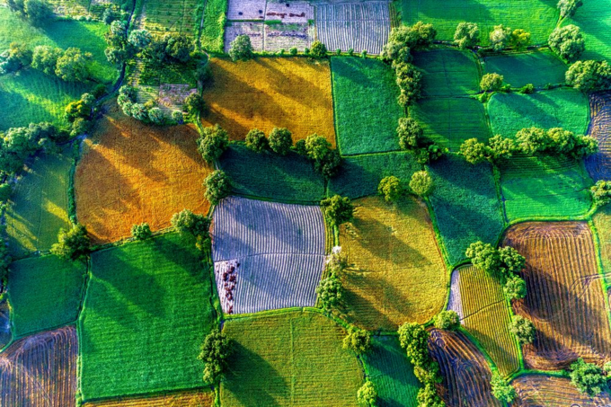 An aerial view of rice fields in Mekong Delta, Tri Ton Town, An Giang Province, Vietnam. Photo by Shutterstock/Tonkinphotography