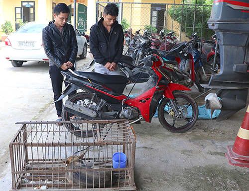 Two brothers arrested for stealing hundreds of dogs in central Vietnam