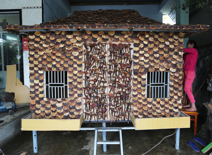 Man makes stilt house out of 200 kg of medicinal mushrooms