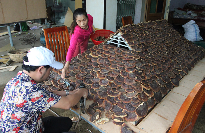 Man makes stilt house out of 200 kg of medicinal mushrooms - 5