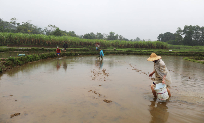 Come winter, Vietnamese farmers develop a feel for the eel