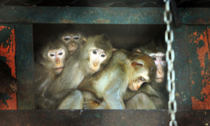Hanoi zoo keeps animals warm amid freezing cold