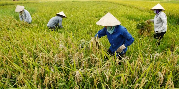 Vietnam eyes top 15 agriculture spot in 10 years