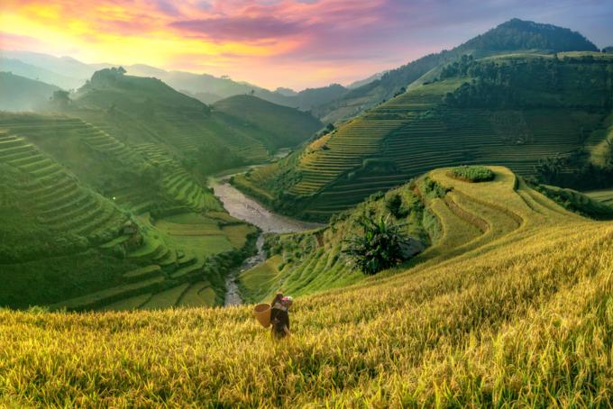 Vietnam landscape terraced rice field in Sapa. Photo by Shutterstock/Thampitakkull Jakkree.