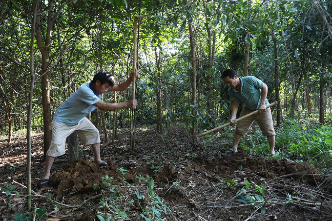 Hunting for protein-rich termite queens in Vietnam - 4