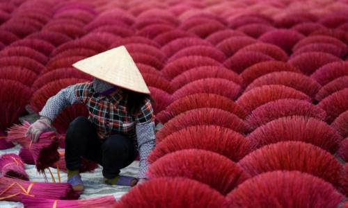 Hanoi's incense village blazes pink ahead of Lunar New Year