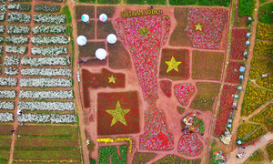 Vietnamese football fan says it with flowers, thousands of them
