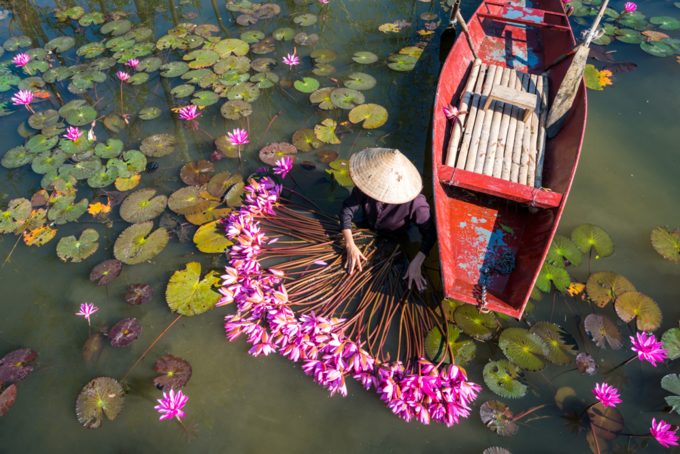 Yen river with rowing boat harvesting waterlily in Ninh Binh. Photo by Shutterstock/Vietnam Stock Images.