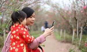 Spring's in Hanoi, time for peach blossom photo ops