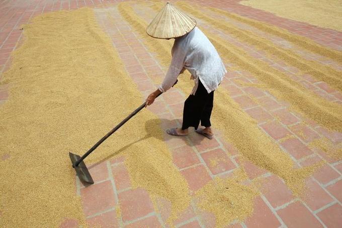 India prices slip as demand lags; Vietnam awaits major harvest
