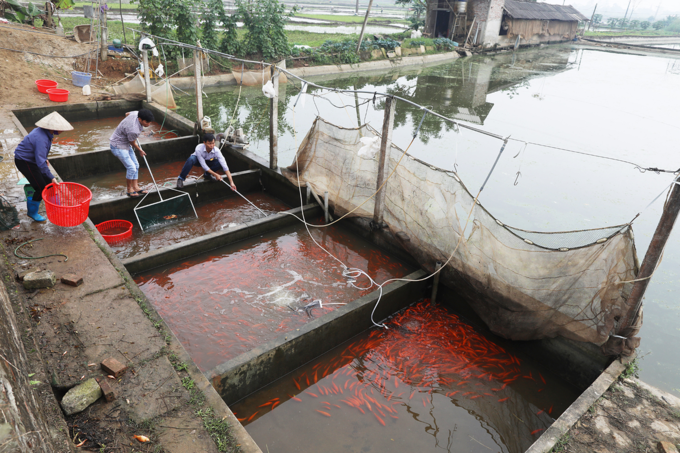 Vietnam village gets red carps ready for Kitchen Gods Tet trip